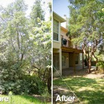 fort myers tree removal